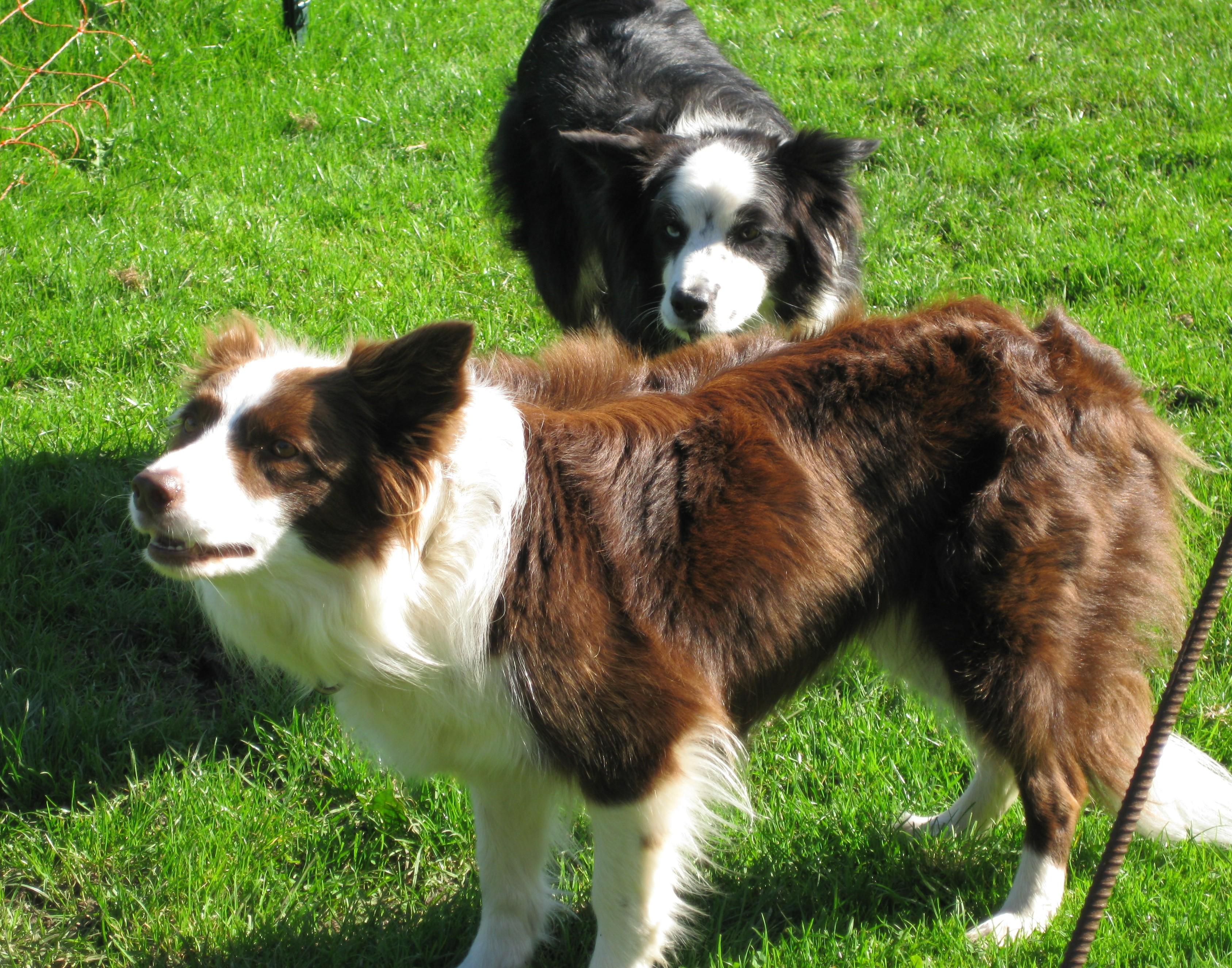 Leeloo & Macy