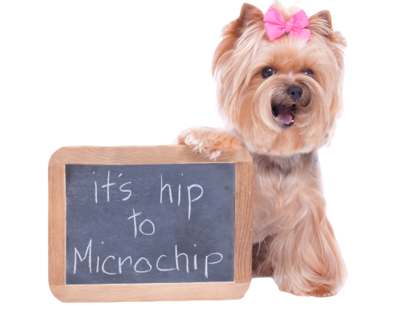 How Can You Find Your Dog S Microchip Number