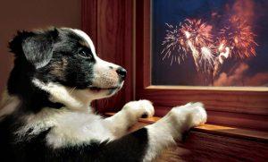 fireworksdog