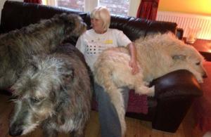 Sacha on dog couch